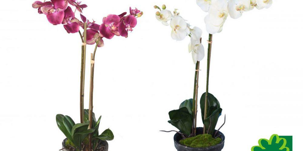 9 nouvelles orchidées phalaenopsis en pot à découvrir dans la rubrique nouveautés, ou plantes artificielles, une décoration intemporelle !