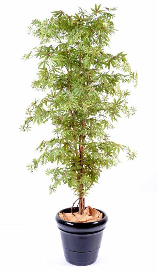 aralia new vert rouge 1 1