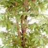 aralia new vert rouge 2 2 1