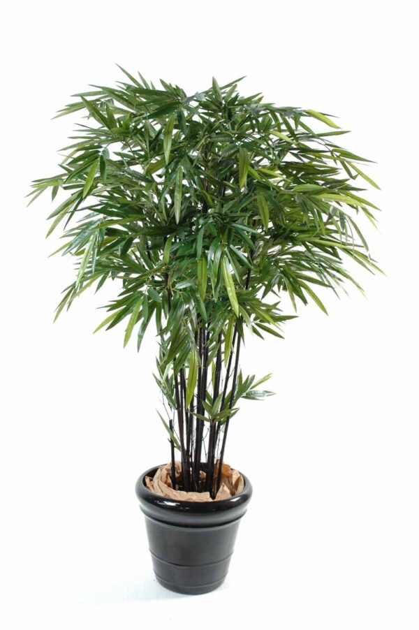 bambou black natural 1 1