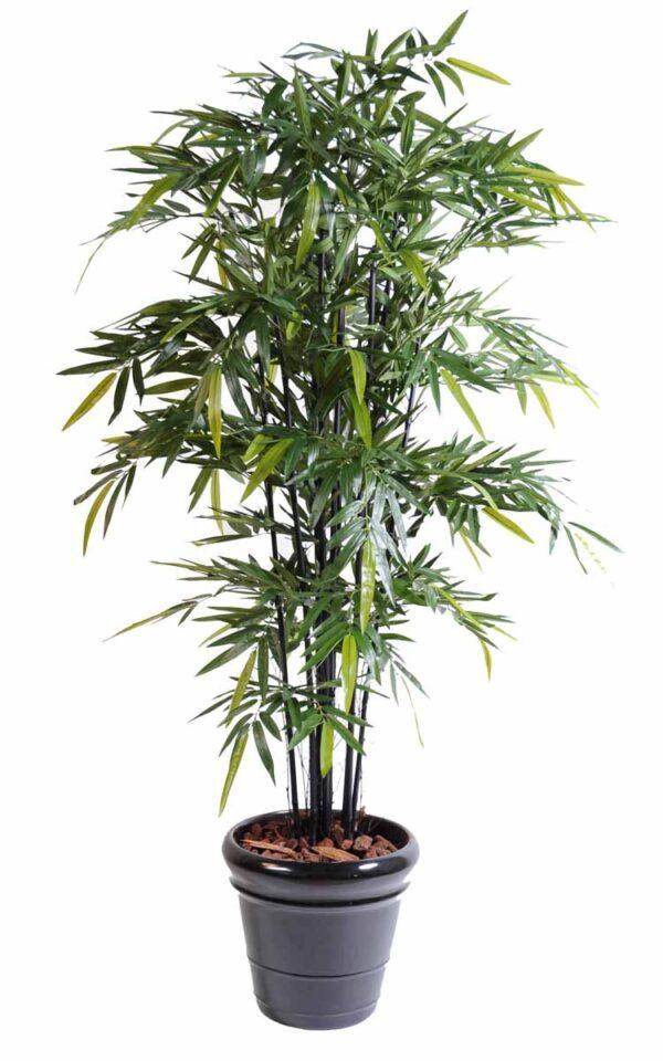 bambou black natural nc 1 1