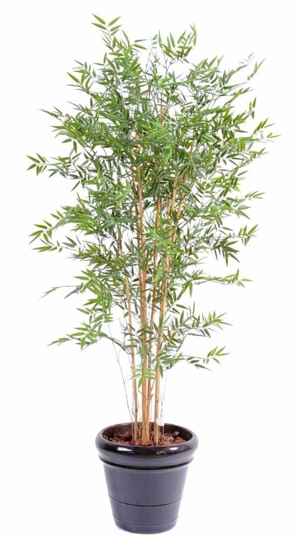 bambou japanese plast 6 1