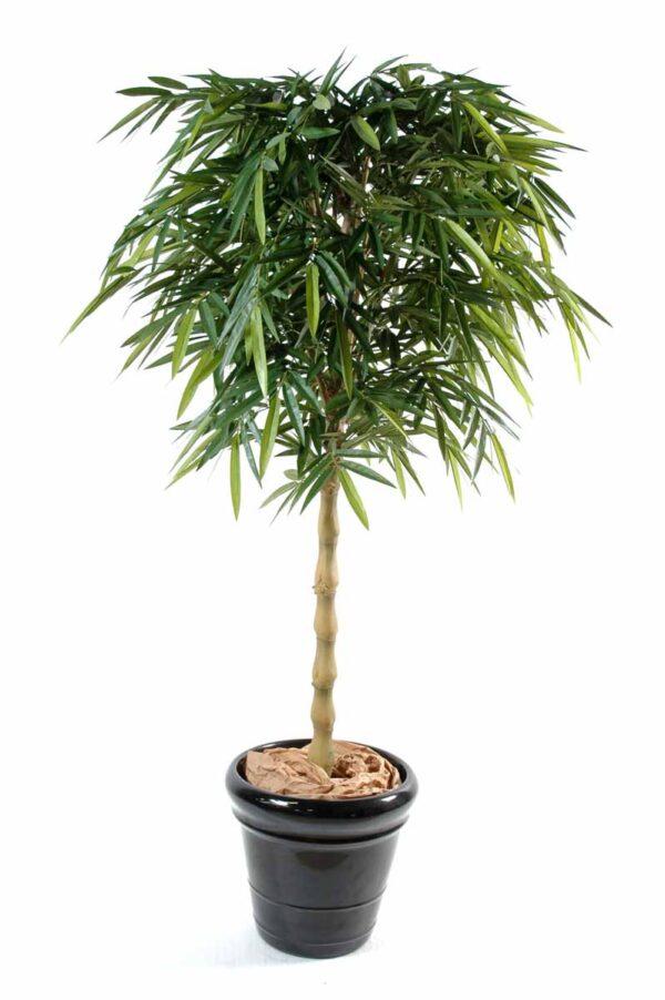 bambou new bouddha 1 1