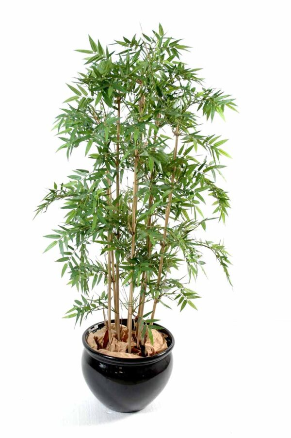 bambou oriental 1