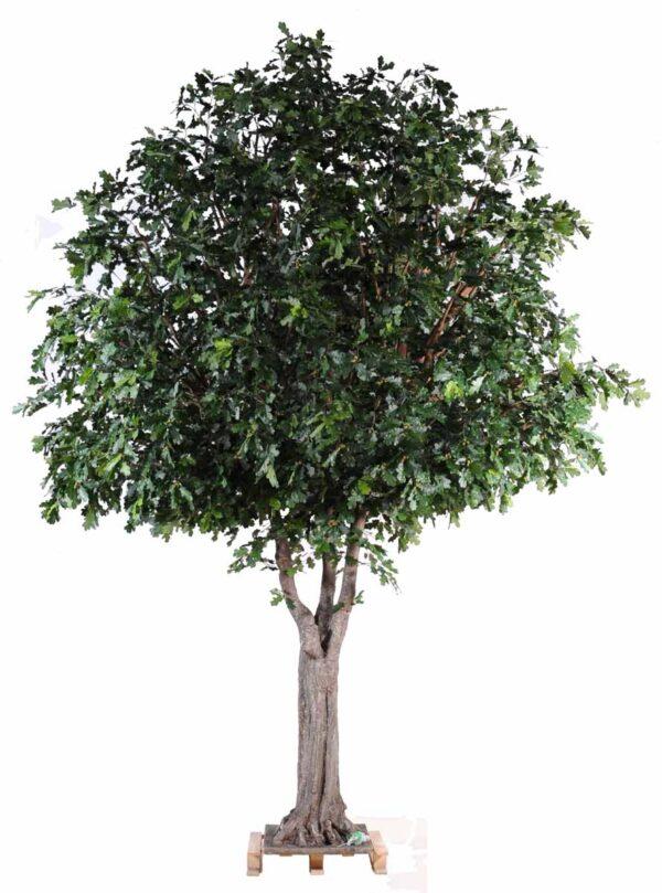 chene arbre 1 1