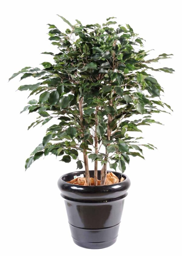 ficus artificiel exotica buisson 1 1
