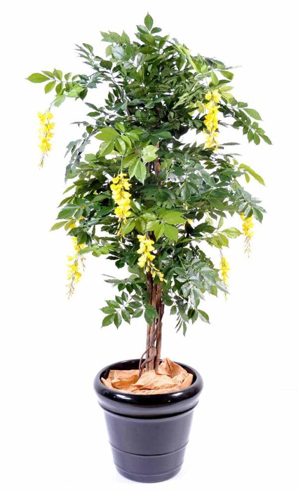 glycine multi tree 1 1