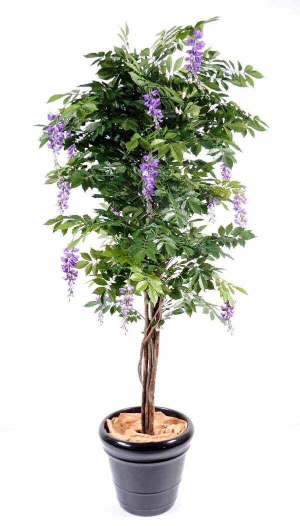 glycine multi tree 4 1