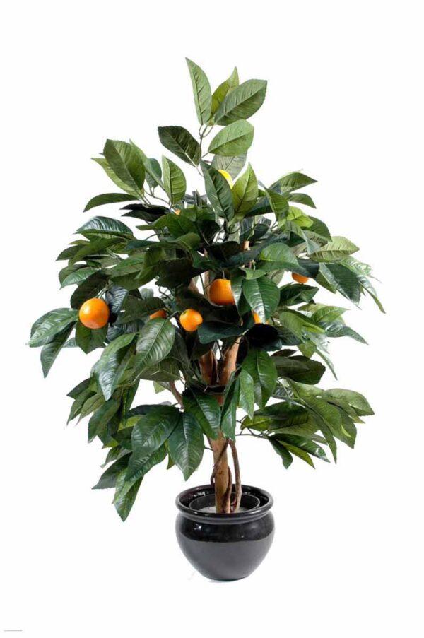 oranger 1 1