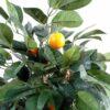 oranger 2 1
