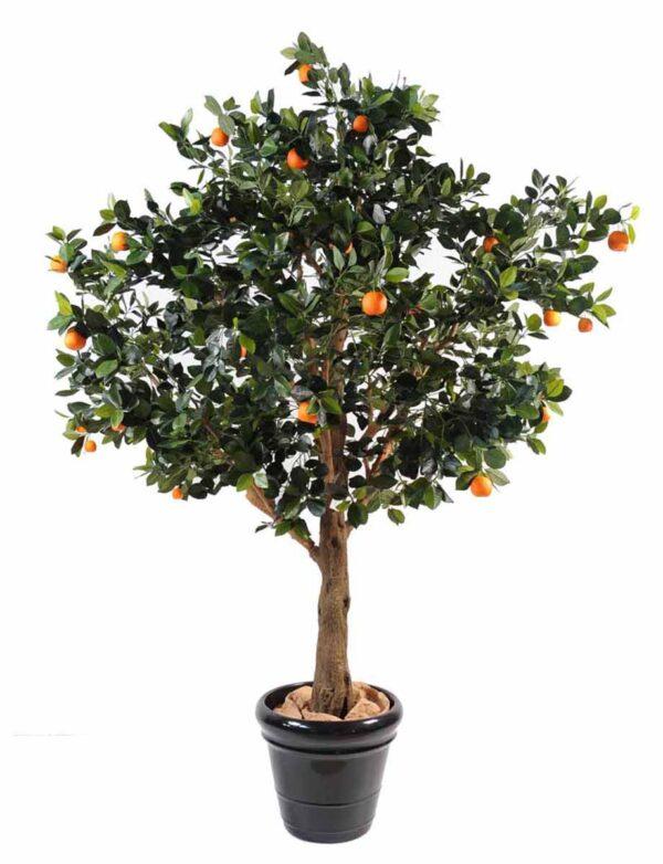oranger arbre 1 1