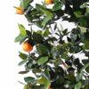 oranger arbre 4 1