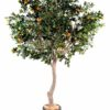 oranger arbre large 1 1