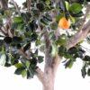 oranger arbre large 3 1