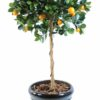 oranger boule 1 1
