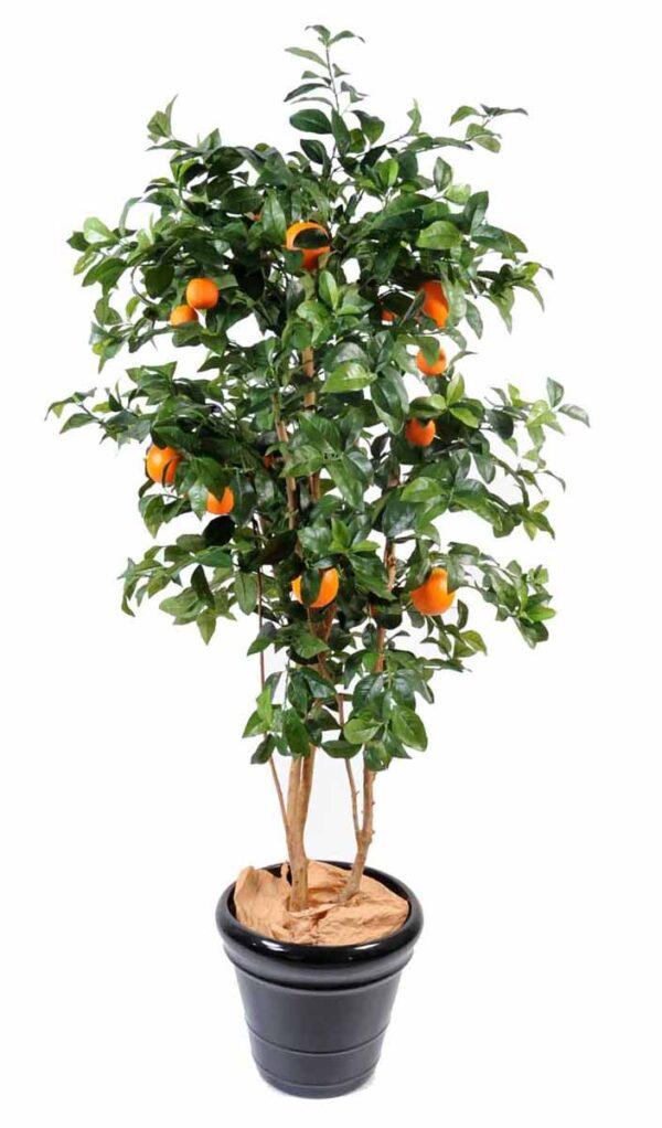 oranger new 1 1