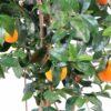 oranger new 2 1