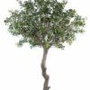 pittosporum artificiel arbre 1 1