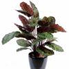 plante artificielle calathea roseopicta rouge vert 1 1