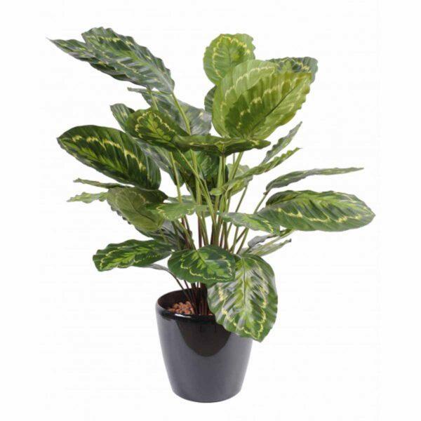 plante artificielle calathea roseopicta vert 1 1