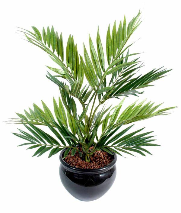 plante artificielle chamaeodorea 1 1