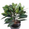 plante artificielle cyathistipula 1 1