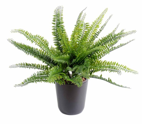 plante artificielle fougere boston plast 1 1