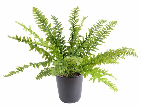 plantes artificielle fougere boston 1 1