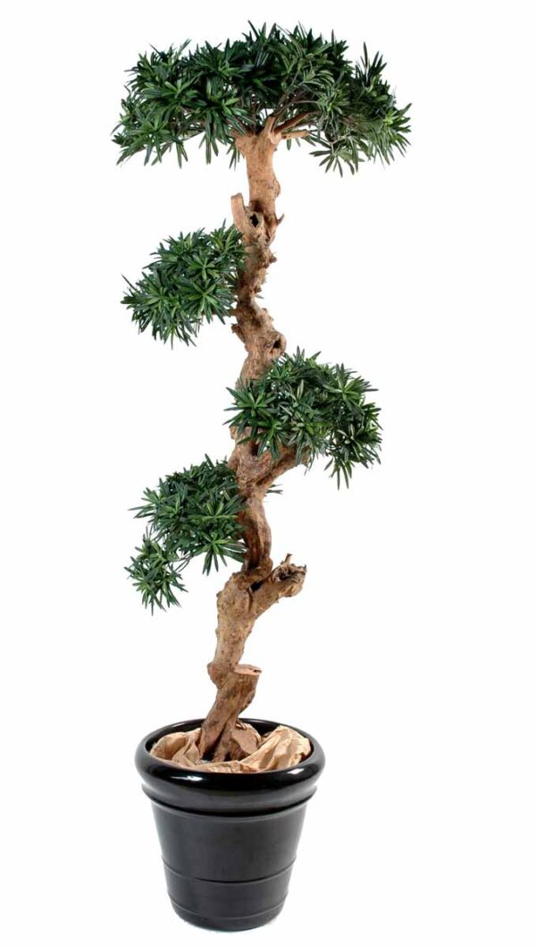 podocarpus artificiel nuage 1 1
