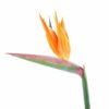 fleur artificielle strelitzia 2 1