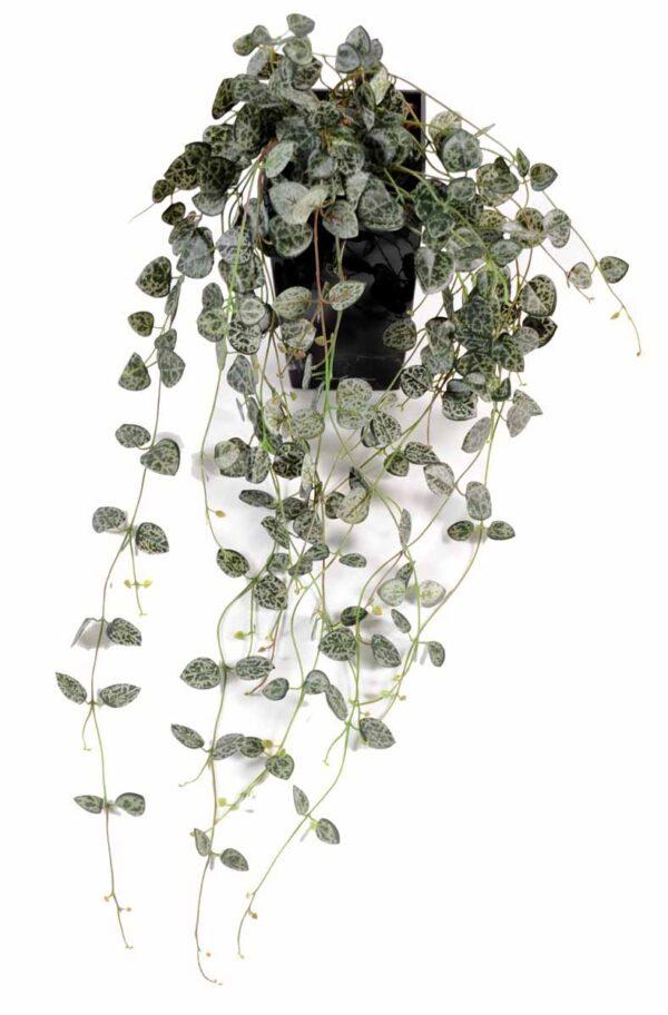plante artificielle ceropegia 1 1