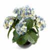 plante artificielle fleurie hortensia bleu 1 1
