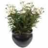 plante artificielle fleurie marguerite anthemis 1 1
