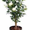 plante artificielle rosier royal arbuste rose creme 1 1