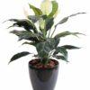 plante artificielle spathiphylium 3 1