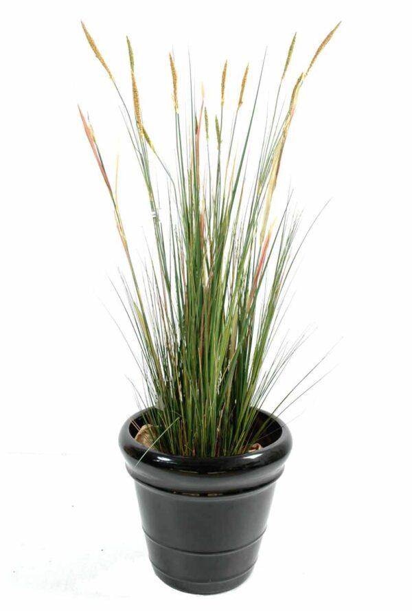 plante artificielle zanichellie des marais 1 1