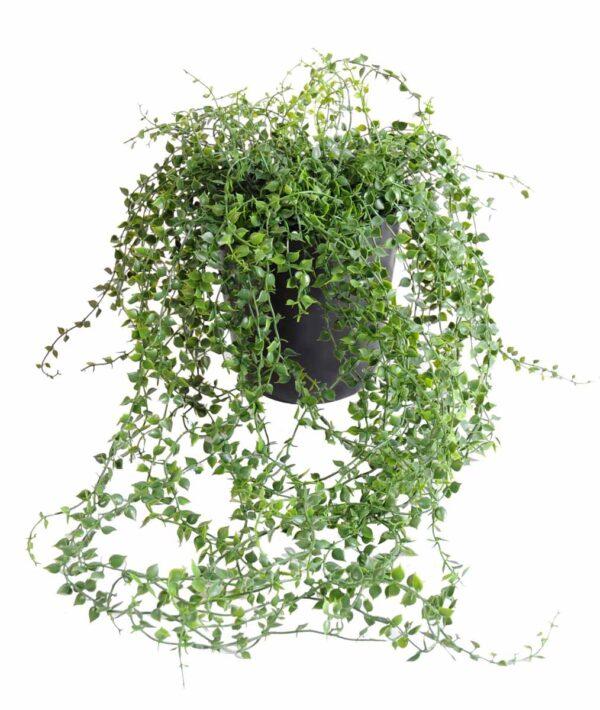 plantes artificielle callisia plast 1 1