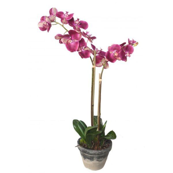 phalaenopsis orchidee artificielle 3138 1 31 1